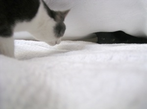 photo of two cats under cover